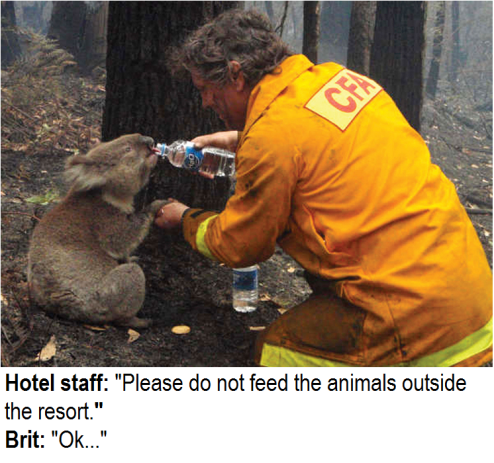 please dont feed the animals outside the hotel